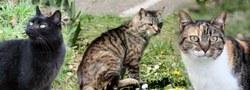 La SPA relance sa campagne de stérilisation des chats errants à Anderlues