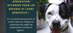 Situation des refuges pour animaux